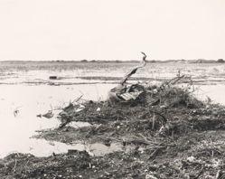 Destroyed Swamp