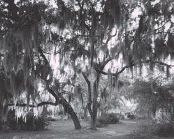 Thompson Avenue, Eatonville, FL, June 2003, from the Eatonville Portfolio