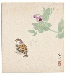 Sparrow under Sweetpeas