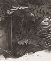 Foliage Study for the series Parrots and Cockatoos