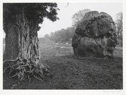 Stone & Tree, Avebury, England, from Portfolio II