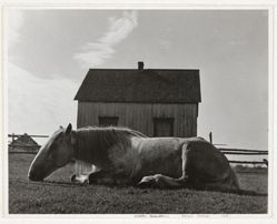 Horse, Gaspe