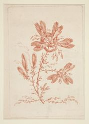 Untitled (Ideal Flowers), from a set of six