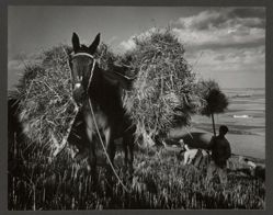 Loading Hay, from the series Spanish Village
