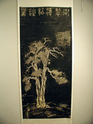 Rubbing of a Cyprus tree on a bank