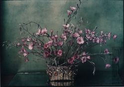 Untitled [pink flowers]
