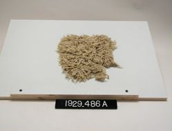 Textile Fragment with Pile