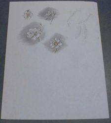 Drawing of Floral Blossoms