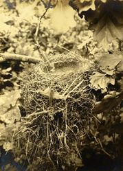 Empty Nest with Twig in Front