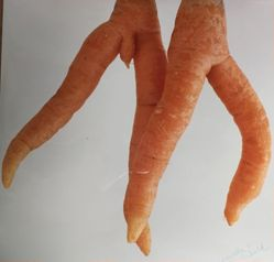Two Carrots at Nude Beach