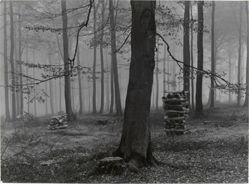 Buchenwald... (Beech wood...)