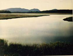 Tidal marsh, Mount Desert Island, Maine August 4, 1965