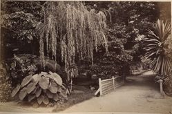 Botanic Gardens, Sydney, from the album [Sydney, Australia]