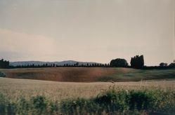 Hillside, from the portfolio Toscana