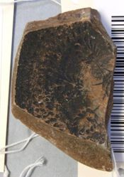 Athenian black glazed cup fragment with linked palmettes and rouletting