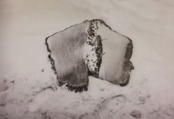 Untitled [Tree stump], from When the Bough Breaks