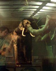 Elephant, from the portfolio: Elephant, Bad Dog, Dusted