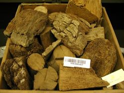 Box of wood fragments