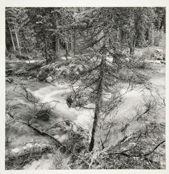Canadian Rockies, 2005