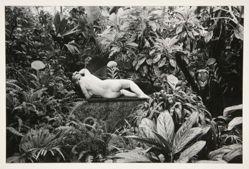 Hommage au Douanier Rousseau, Paris 1980, from the portfolio: Edouard Boubat, 1981