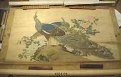 Peacocks and Peonies