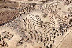 """LATITUDE: 31°21'41""""N / LONGITUDE: 34°45'54""""E, October 9, 2011. Planting of the GOD TV Forest on the former land of the Bedouin village of al-ʽAraqīb. GOD TV, in concert with the JNF, is planting one million trees in Israel to fulfill their millenarian prophecy to prepare the land for the return of the messiah. Along the streambed on the top left of the image, in the white area, is an old Bedouin cistern. In the lower right-hand quadrant of the image are the remains of the two-room home of Jaber al-Qawāsme, a member of the ʽAlamāt tribe, who fled his home with his family following a massacre in 1948 nearby. The house was demolished in 1948/49 so as to remove evidence of habitation and to lessen the impetus for the family to return. Villagers in the surrounding area fled in rapid succession following the news, narrated by a survivor, of a massacre of fourteen Bedouin men by a local Jewish gang in October 1948 in a house less than a kilometer from this site (the witness died of his wounds the following day)., from the series Desert Bloom"""
