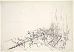 Sketch of vines in a trellis