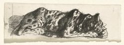 Study of a Leopard