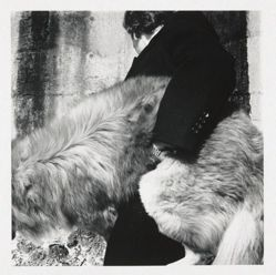 Untitled (Dog with Man)