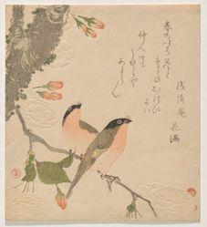 Two Bullfinches on a Double-Petalled Cherry Tree (Uso ni Yae-zakura)