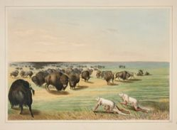 Buffalo Hunt, Under the White Wolf Skin, pl. 13 from the North American Indian Portfolio