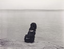 Matthew Brady Contemplating Lake Superior