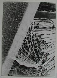 Spinnweben (cobwebs)