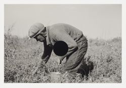 Blueberry picker, near Little Fork, Minnesota, 1937, Russell Lee, 8a21891, from the portfolio Ground
