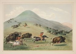 Buffalo Hunt, Chase, pl. 6 from the North American Indian Portfolio