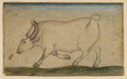 Pen drawing of a bullock