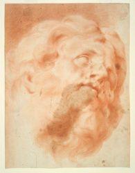 Head of a Man with Beard
